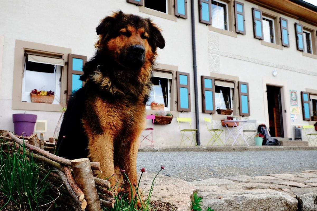 hund_elsass_vogesen_martinfrick-7960