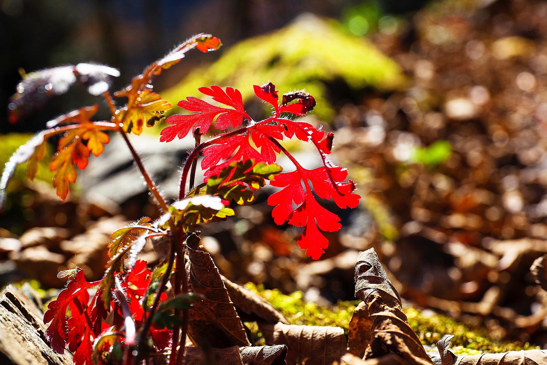 Elsass Vogesen Herbstwanderung