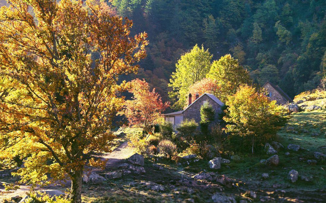 Herbst in den Vogesen zwischen Frankenthal und Le Hohneck