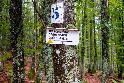 Rundwanderung Col de la Schlucht Hirschsteine Lac Vert – Tagestour