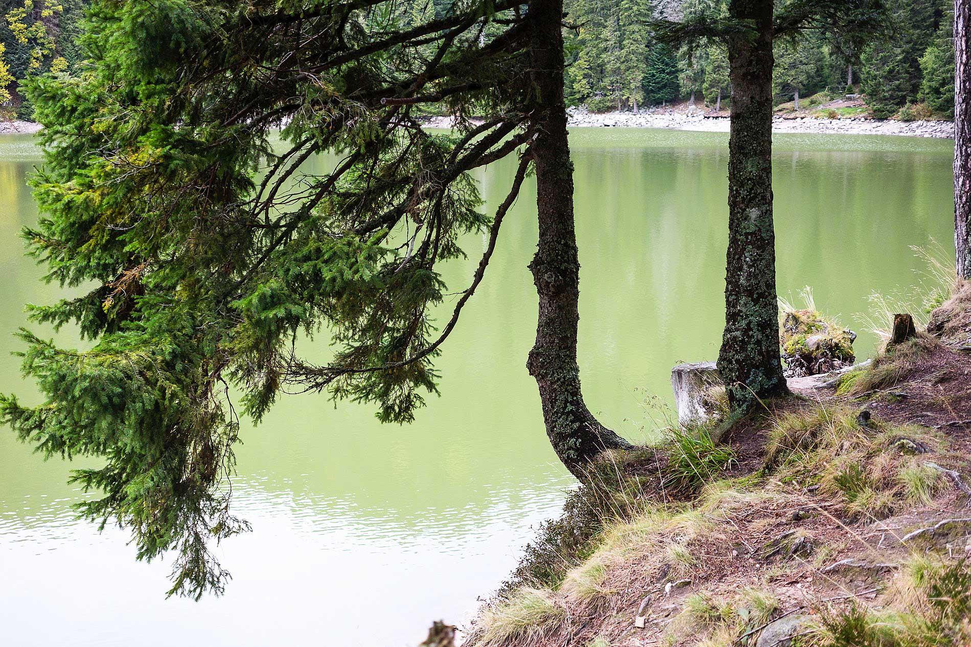 Lac Vert Vogesen Elsass Wanderung