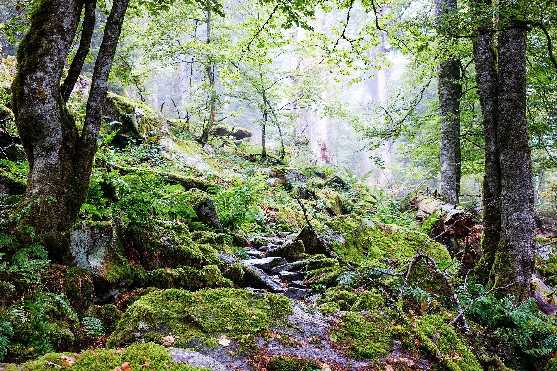 Klettersteig Vogesen : Rundwanderung col de la schlucht hirschensteine wandern vogesen